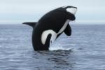 DEX Orca набазе Solana привлекла $18 млн инвестиций всерииА